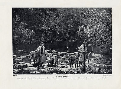 Scottish Deerhound Owners And Dogs In River Old Original 1934 Dog Print Page