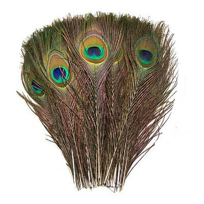 New 50pc Beautiful Natural Great Decorations Peacock Tail feathers