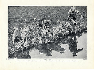 Norwegian Elkhound Named Owner And Dogs By Stream Original 1934 Dog Print Page