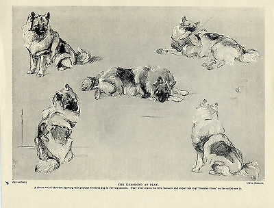 Keeshond Dogs At Play Charming Old Original Dog Print From 1934