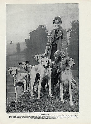 Saluki  Lady With Group Of Winning Dogs Old Original Dog Print From 1935