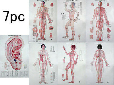 """7pc 32"""" Wall Posters Acupoints Chinese Acupuncture Point"""