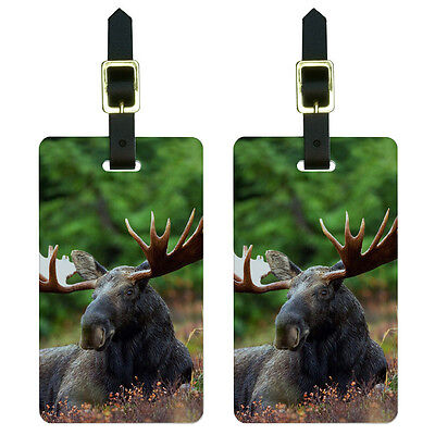 Moose Male Bull Antlers Luggage Suitcase Carry-On ID Tags Set of 2