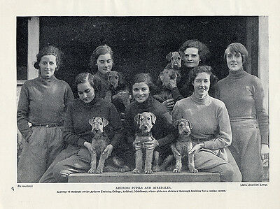 Airedale Terrier Original Vintage Dog Print Page 1934 Ardross Training College
