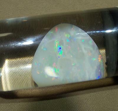 Clam Shell Australian Opal - 16.5 ct - lots of fire - nearly one of a kind