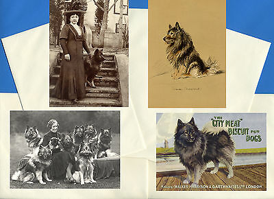Keeshond Pack Of 4 Vintage Style Dog Print Greetings Note Cards
