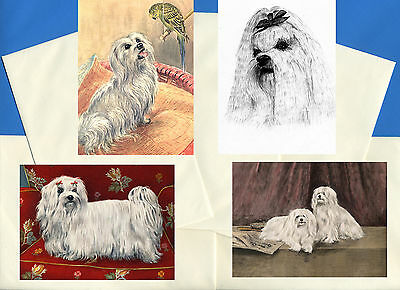 Maltese Pack Of 4 Vintage Style Dog Print Greetings Note Cards #2