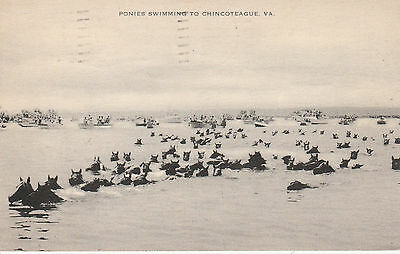VINTAGE POSTCARD CHINCOTEAGUE PONY HORSE SWIMMING FROM ASSATEAGUE ISLAND C 1960