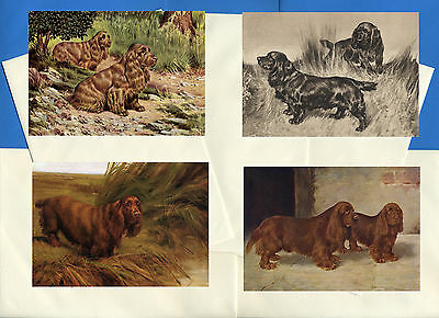 Sussex Spaniel Pack Of 4 Vintage Style Dog Print Greetings Note Cards