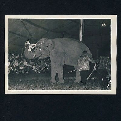 US CIRCUS CLARK & WALTERS Elephant Elefant * Vintage 1966s Archives' Photo #2