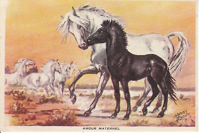 CAMARGUE ARTIST SIGNED HENRY COUVE HORSE POSTCARD - SWEET MARE AND FOAL