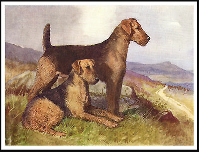 Airedale Terrier Two Dogs Lovely Vintage Style Dog Print Poster