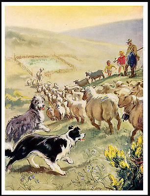 Bearded And Border Collie Dogs At Work Lovely Vintage Style Dog Print Poster