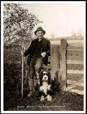 Bearded Collie Cotswold Shepherd And His Dog Lovely Vintage Style Print Poster