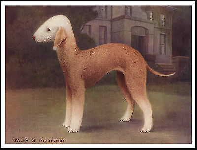Bedlington Terrier Named Dog Lovely Vintage Style Dog Print Poster