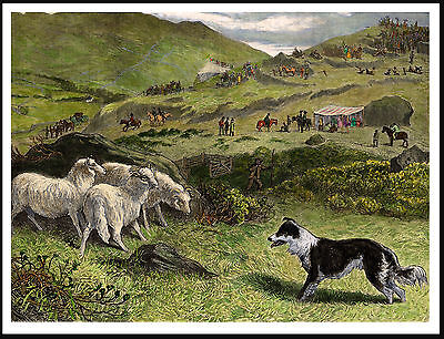 Border Collie Herding Sheep At Trials Lovely Vintage Style Dog Print Poster