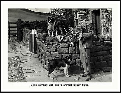Sheepdog Trials Winner With His Border Collie Dogs Lovely Dog Print Poster