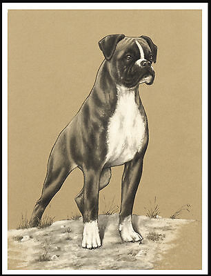 Boxer Lovely Image Of A Standing Dog Vintage Style Dog Print Poster