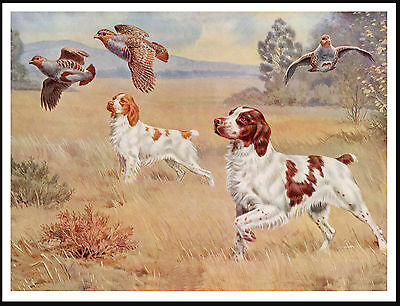 Brittany Spaniel Dogs And Birds Lovely Vintage Style Dog Print Poster