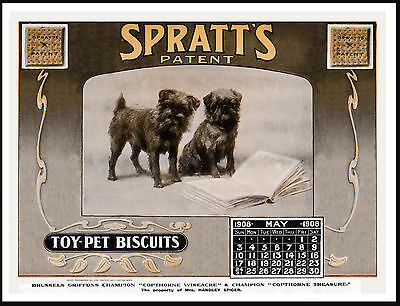 Brussels Griffon Dog Food Calendar Advert Great Vintage Style Dog Print Poster