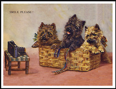 Cairn Terrier Dogs In A Basket Lovely Vintage Style Dog Print Poster