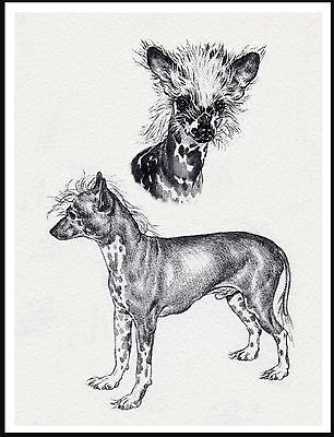 Chinese Crested Lovely Sketch Style Dog Print Poster