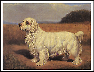 Clumber Spaniel Old Style Standing Dog On Lovely Dog Print Poster