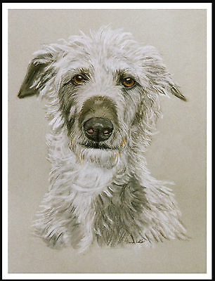 Scottish Deerhound Great Head Study Lovely Image Dog Print Poster