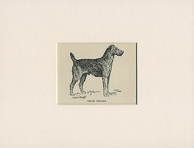 WELSH TERRIER LOVELY ANTIQUE DOG PRINT FROM 1912 by WARDLE READY MOUNTED