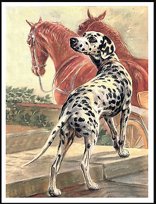 Dalmatian Dog And Horses Lovely Dog Print Poster