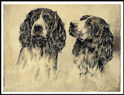 English Springer Spaniel Two Dogs Head Study Vintage Style Dog Art Print Poster