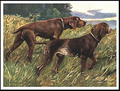 German Shorthaired Pointer Two Dogs Great Dog Print Poster