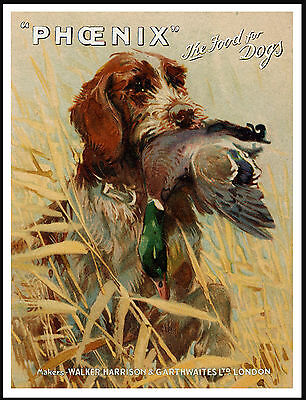 German Wirehaired Pointer And Bird On Vintage Style Dog Food Advert Print Poster