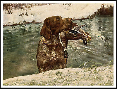 German Wirehaired Pointer With Bird Emerging From Water Great Dog Print Poster