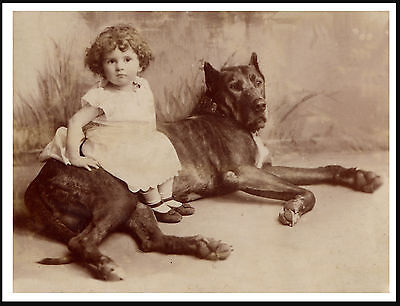 Great Dane Big Dog With Little Girl Lovelyvintage Style Dog Photo Print Poster