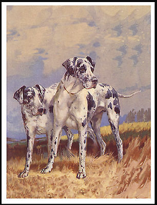Two Harlequin Great Dane Dogs Lovely Vintage Style Dog Art Print Poster
