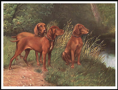 Hungarian Vizsla Group Of Dogs Lovely Vintage Style Dog Art Print Poster