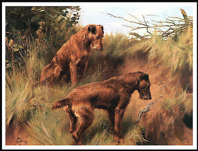 Irish Terrier Two Dogs Lovely Vintage Style Dog Print Poster