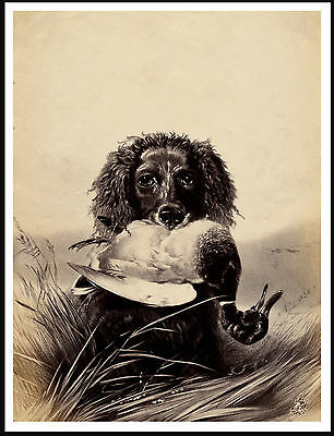 Irish Water Spaniel And Duck Lovely Vintage Style Dog Print Poster