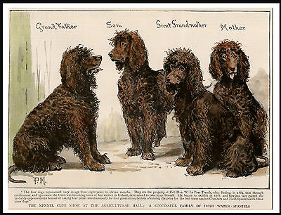 Irish Water Spaniel Group Of Dogs Lovely Vintage Style Dog Print Poster