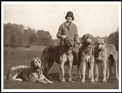 Lady And Her Irish Wolfhound Dogs Lovely Vintage Style Image Dog Print Poster