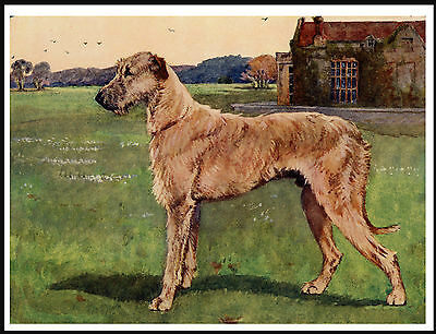 Irish Wolfhound Standing Dog Lovely Dog Print Poster