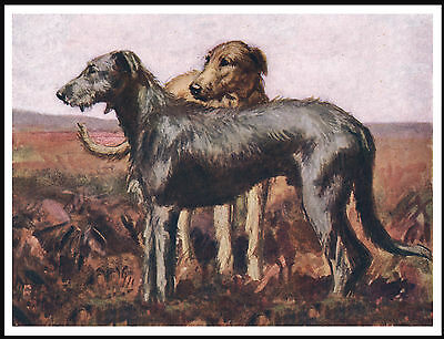 Irish Wolfhound Dogs In A Moorland Scene Lovely Vintage Style Dog Print Poster