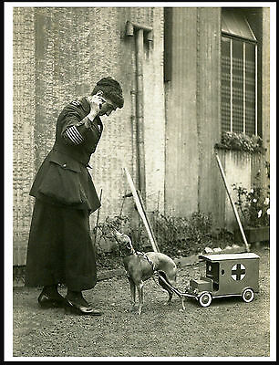 Italian Greyhound Pulling Toy Ambulance Lady In Uniform Lovely  Print Poster