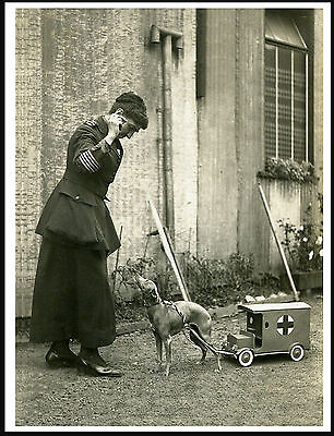 Lady In Uniform Italian Greyhound Pulling Toy Red Cross Ambulance Print Poster