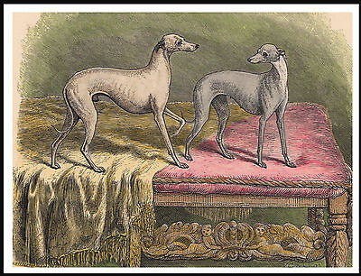 Italian Greyhound Two Little Dogs Charming Vintage Style Image Dog Print Poster