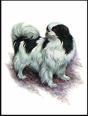 Japanese Chin Little Dog Lovely Dog Print Poster