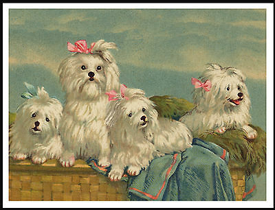 Maltese Dogs In A Basket Lovely Vintage Style Dog Art Print Poster