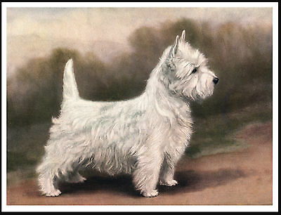 Westie West Highland White Terrier Standing Dog Lovely Dog Print Poster