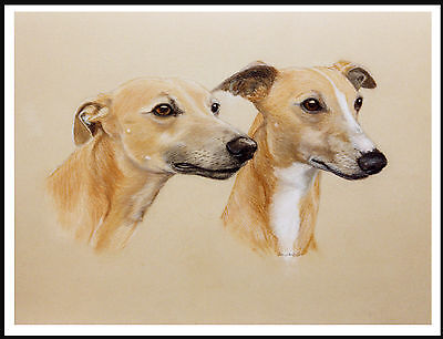 Whippet Lovely Head Study Two Dogs Dog Print Poster